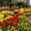 Thumbnail image for The Tet Flower Festival in Ho Chi Minh City