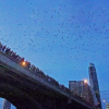 Thumbnail image for Quirky America: Going batty in Austin, Texas