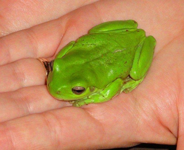 Australia frog-travel tips