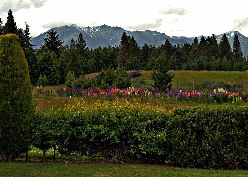 New Zealand Twizel view