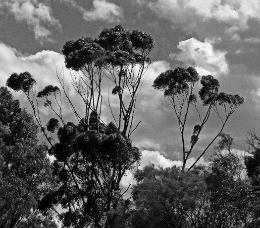 Tree picutres