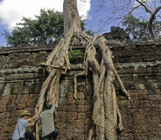 Angkor Ta Prohm trees Lara Croft