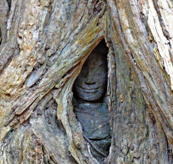 Angkor Wat Ta Prohm trees