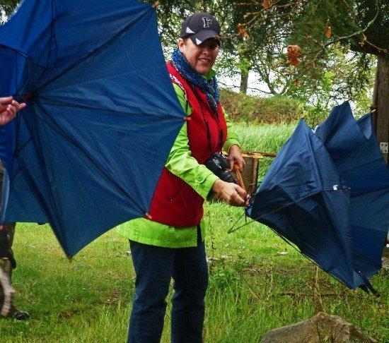 Truffle hunting Sondra umbrellas