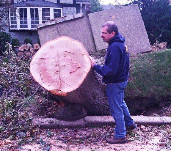 Hurricane Sandy damage tree on sidewalk