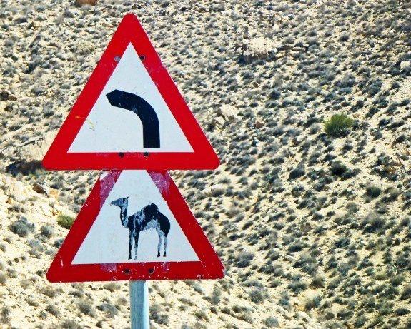 camel crossing sign Jordan