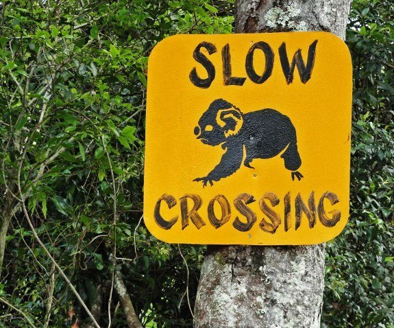 koala crossing sign australia