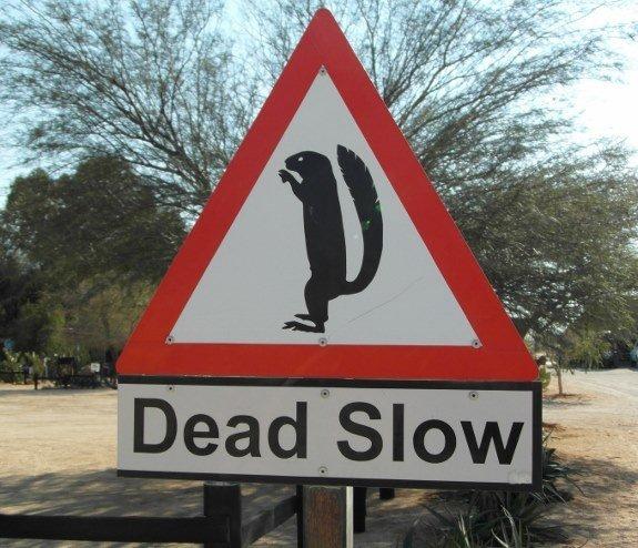 meerkat warning sign