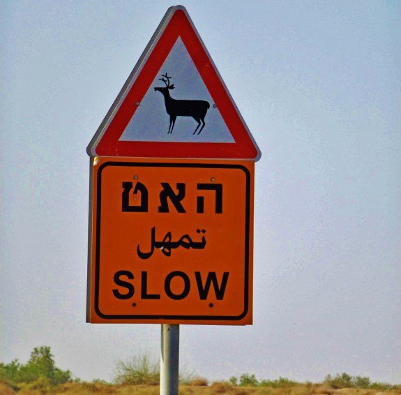 animal crossing sign deer israel
