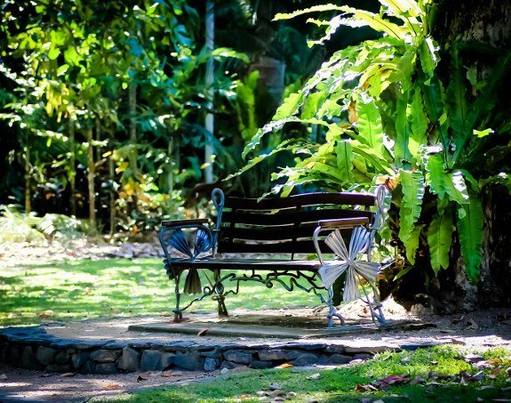 free things to do in Cairns botanical garden