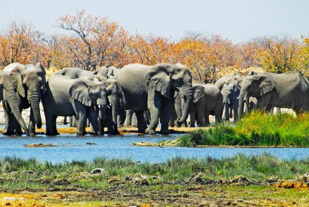 Etosha 30 elephants at waterhole-Namibia