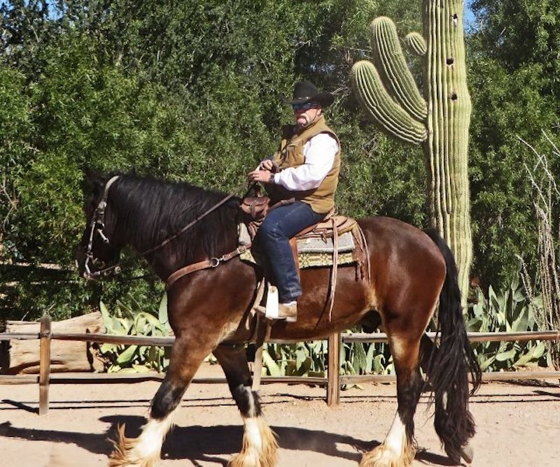 how to choose a dude ranch clydesdale horse (640x534)