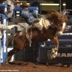 Rodeo rider in Kissimmee Florida