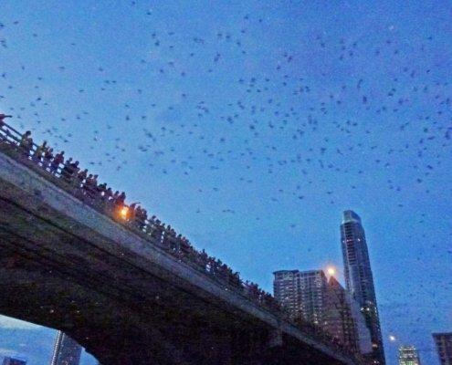 Bats at dusk, bridge Austin, Texas