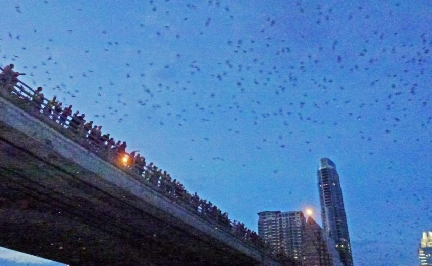 Bats at dusk, bridge Austin, Texas