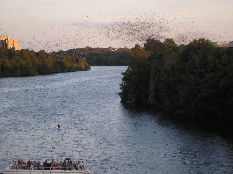 Bats Austin Texas CC Flickr deadwords (800x598)