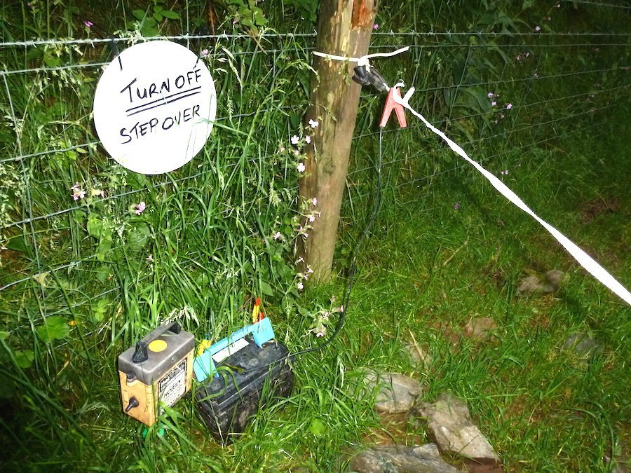 "England electric fence for ""Killer Cows"""