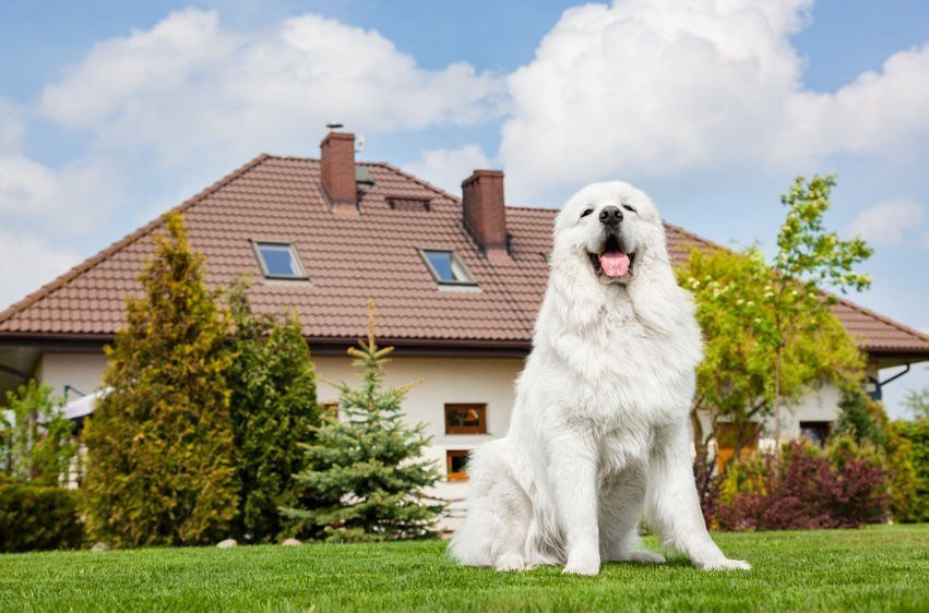 best house sitting websites, long term house sitting jobs