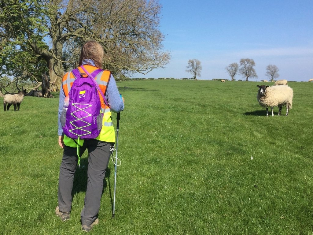 Hiking with purple daypack and sheep